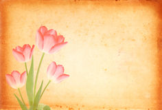 Frische rosafarbene Tulpen Stockfotos