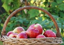 Frische rote Äpfel Stockfotografie