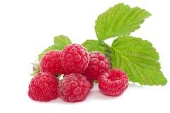 Frische rote Beere mit Blättern auf weißem Hintergrund Stockbild