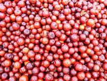 Frische rote Beeren Lizenzfreie Stockfotografie