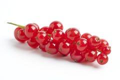 Frische rote Beeren, Korinthen Stockbild