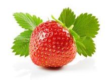 Frische rote Erdbeere Stockbilder