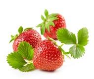 Frische rote Erdbeeren mit grünen Blättern Stockfoto
