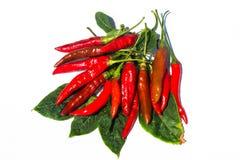 Frische rote Paprikas auf weißem Hintergrund Stockfotografie