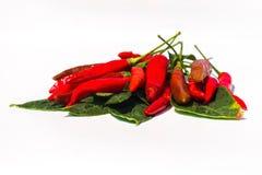 Frische rote Paprikas auf weißem Hintergrund Lizenzfreies Stockbild