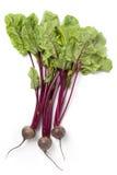 Frische rote Rüben mit grünen Blättern lizenzfreie stockfotografie