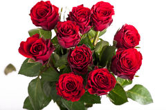Frische rote Rosen Lizenzfreies Stockbild