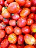 Frische rote Tomate Lizenzfreie Stockfotos