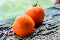 Frische rote Tomate lizenzfreie stockfotografie