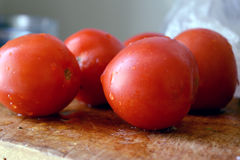 Frische rote Tomate vom Garten mit Tröpfchen der Feuchtigkeit Lizenzfreies Stockfoto