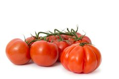 Frische rote Tomaten Lizenzfreies Stockbild