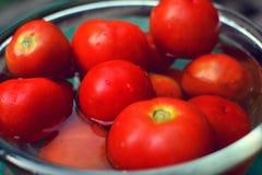 Frische rote Tomaten in einer Schüssel Wasser Stockfotografie