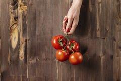 Frische rote Tomaten in Frau ` s Händen mit den schönen Fingern, hölzerner Hintergrund, vegetarisches Konzept der landwirtschaftl Stockbild