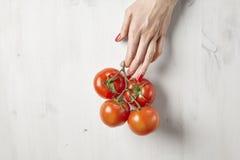 Frische rote Tomaten in Frau ` s Händen mit den schönen Fingern, weißer hölzerner Hintergrund, vegetarisches Konzept der landwirt Stockbild