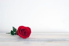 Frische Rotrosenblume auf dem weißen hölzernen Regal Stockbild