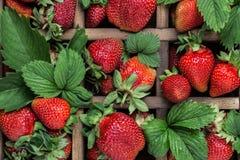 Frische saftige Erdbeeren mit Blättern Viele hellen, sind frische Beeren einer Erdbeere Gesundes Nahrungsmittelkonzept Frische or Lizenzfreies Stockfoto