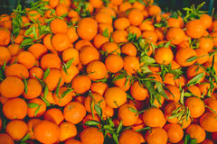 Frische saftige Orangen lizenzfreie stockbilder