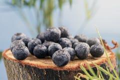 Frische saftige Waldbeeren von Blaubeeren liegen auf einem Baumstumpf herein lizenzfreie stockfotografie