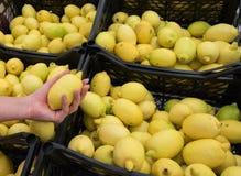 Frische, saftige Zitrone in der Hand Lizenzfreie Stockfotografie