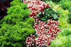 Frische Salate Stockbild