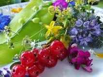 Frische Salate und Kräuter für Gesundheit Lizenzfreie Stockbilder