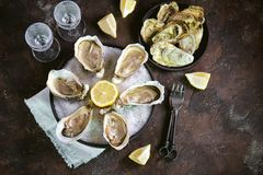 Frische Seeaustern auf einem großen Seesalz mit Zitrone Gesundes Lebensmittel, Delikatesse, Restaurantlebensmittel Stockfoto