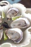 Frische Seeaustern dienten mit Salz und Zitrone Lizenzfreies Stockbild