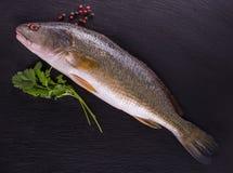 Frische Seefische Stockfotos