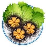 Frische Seeigel und grünes Gemüse auf Platte stock abbildung