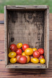 Frische selbstgezogene Tomaten des Gartens in einer hölzernen Kiste Lizenzfreie Stockbilder