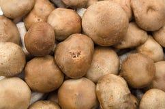 Frische Shiitake-Pilze als Nahrung Stockfotos