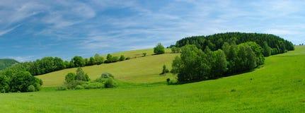 Frische Sommerwiese Lizenzfreies Stockbild