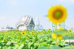 Frische Sonnenblume mit blauem Himmel stockbilder