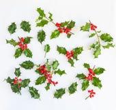 Frische Stechpalme mit roten Beeren für Gestaltungselemente Stockfotografie