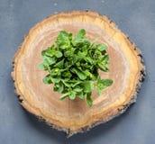 Frische tadellose Blätter auf dem Holztisch Lizenzfreie Stockfotografie
