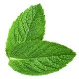Frische tadellose Blätter Stockfoto