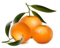 Frische Tangerinefrüchte mit grünen Blättern. Stockfotos