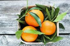 Frische Tangerinemandarinen in einem Weidenkorb Stockfotos
