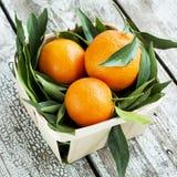 Frische Tangerinemandarinen in einem Weidenkorb Lizenzfreies Stockfoto