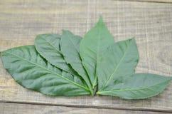 Frische Teeblätter auf dem hölzernen Hintergrund, lokalisiert Stockfoto