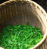 Frische Teeblätter werden in den Körben für die Weiterverarbeitung gesammelt lizenzfreies stockbild