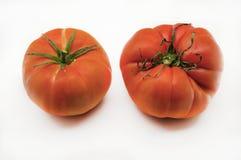 Frische Tomate Lizenzfreies Stockbild