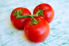 Frische Tomate Stockbild
