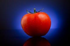 Frische Tomate auf Blau Stockfotografie