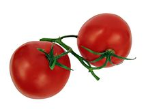 Frische Tomate getrennt Lizenzfreies Stockbild