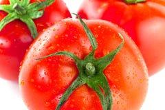 Frische Tomaten Stockbilder