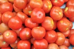 Frische Tomaten Lizenzfreies Stockfoto