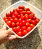 Frische Tomaten Stockfotografie