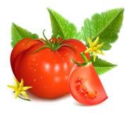 Frische Tomaten auf dem grünen Rapshintergrund Lizenzfreie Stockfotografie