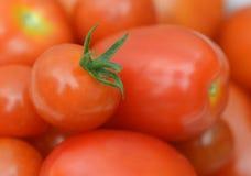 Frische Tomaten auf dem grünen Rapshintergrund Lizenzfreies Stockfoto